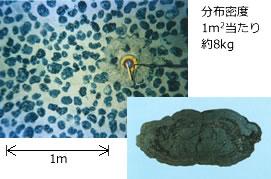深海底鉱物資源とは|深海資源開...
